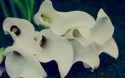 Human Flourishing: Speaking of Sin